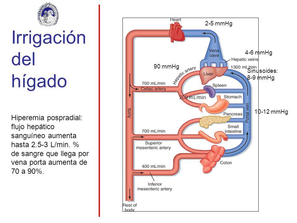 Irrigación del hígado 10-12 mmHg 4-6 mmHg Sinusoides: 8-9 mmHg 2-5 mmHg 90 mmHg 200 mL/min Hiperemia pospradial: flujo hepático sanguíneo aumenta hast