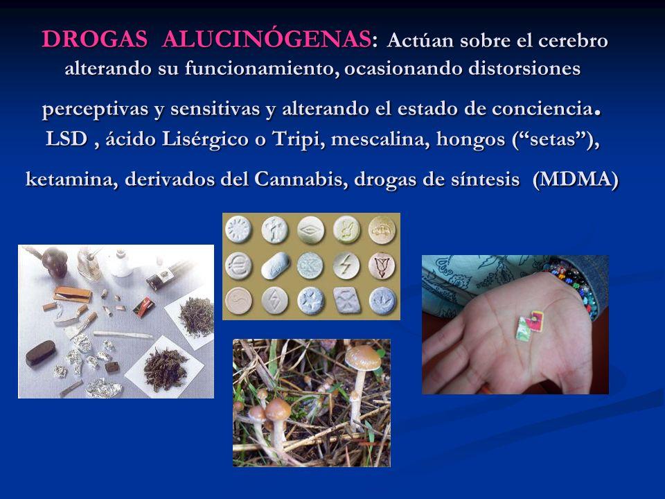 DROGAS ALUCINÓGENAS: Actúan sobre el cerebro alterando su funcionamiento, ocasionando distorsiones perceptivas y sensitivas y alterando el estado de c