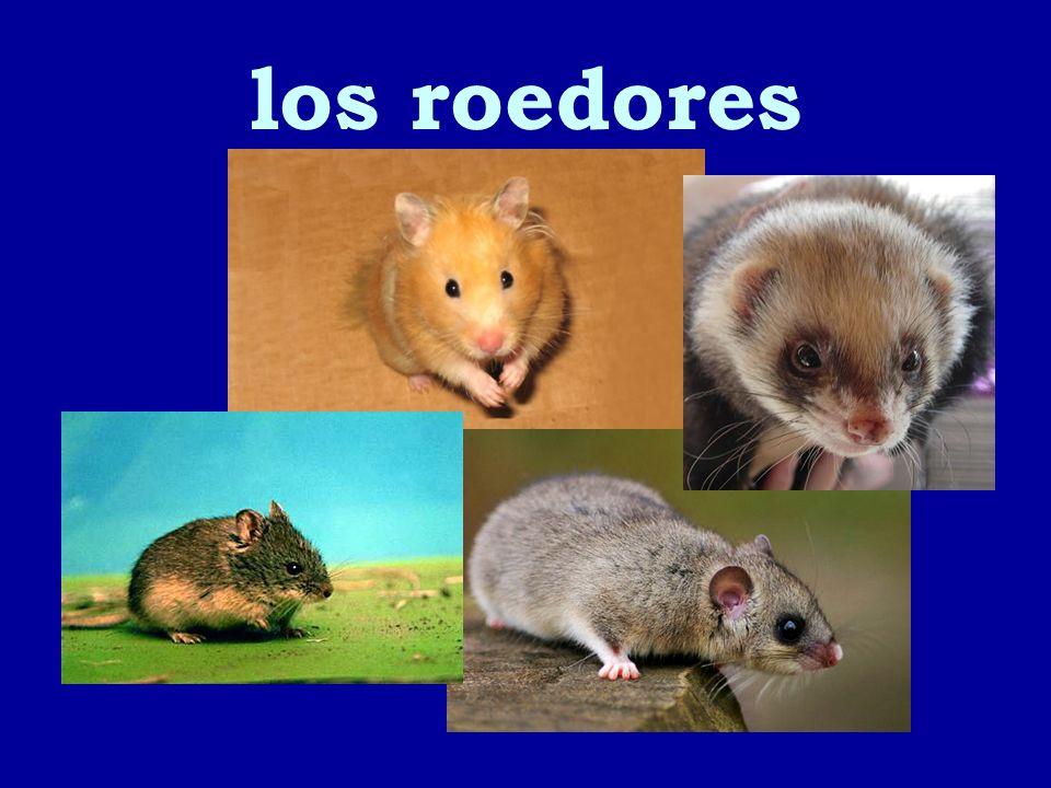 los roedores