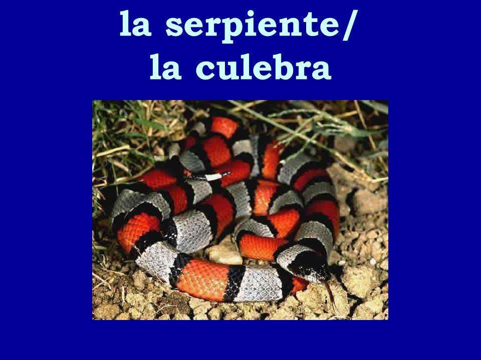 la serpiente/ la culebra
