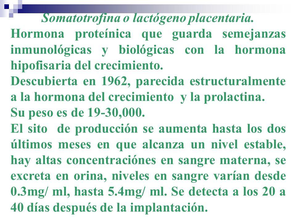 Somatotrofina o lactógeno placentaria. Hormona proteínica que guarda semejanzas inmunológicas y biológicas con la hormona hipofisaria del crecimiento.