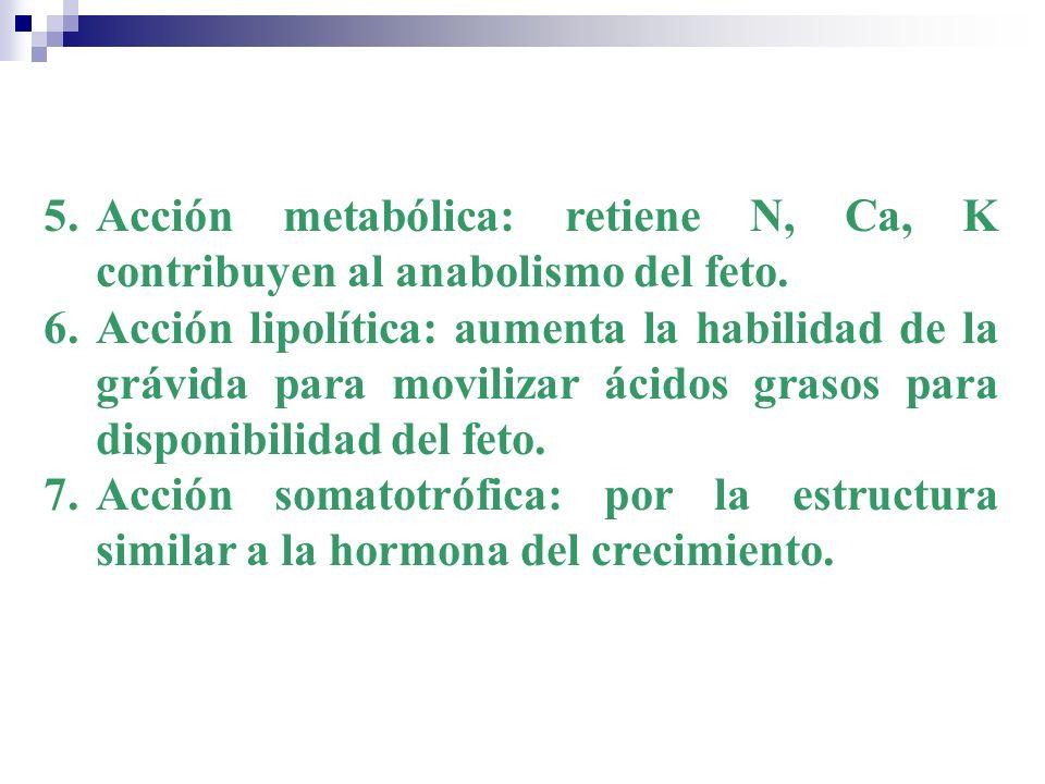 5.Acción metabólica: retiene N, Ca, K contribuyen al anabolismo del feto. 6.Acción lipolítica: aumenta la habilidad de la grávida para movilizar ácido