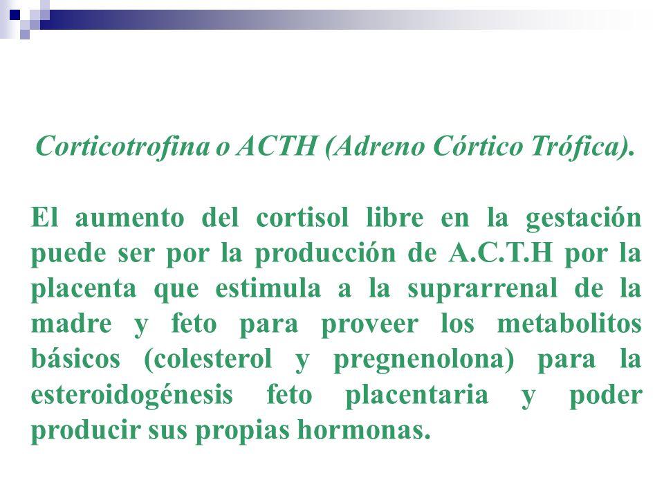 Corticotrofina o ACTH (Adreno Córtico Trófica). El aumento del cortisol libre en la gestación puede ser por la producción de A.C.T.H por la placenta q
