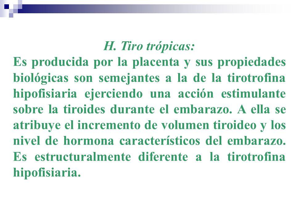 H. Tiro trópicas: Es producida por la placenta y sus propiedades biológicas son semejantes a la de la tirotrofina hipofisiaria ejerciendo una acción e