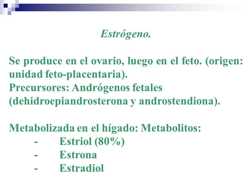 Estrógeno. Se produce en el ovario, luego en el feto. (origen: unidad feto-placentaria). Precursores: Andrógenos fetales (dehidroepiandrosterona y and