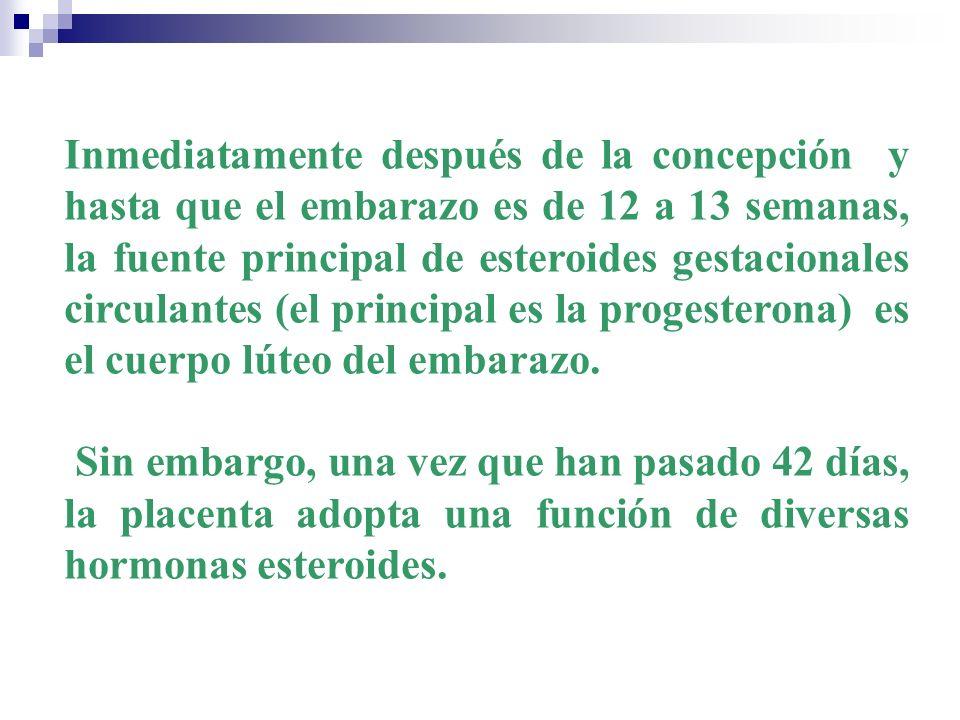 Inmediatamente después de la concepción y hasta que el embarazo es de 12 a 13 semanas, la fuente principal de esteroides gestacionales circulantes (el