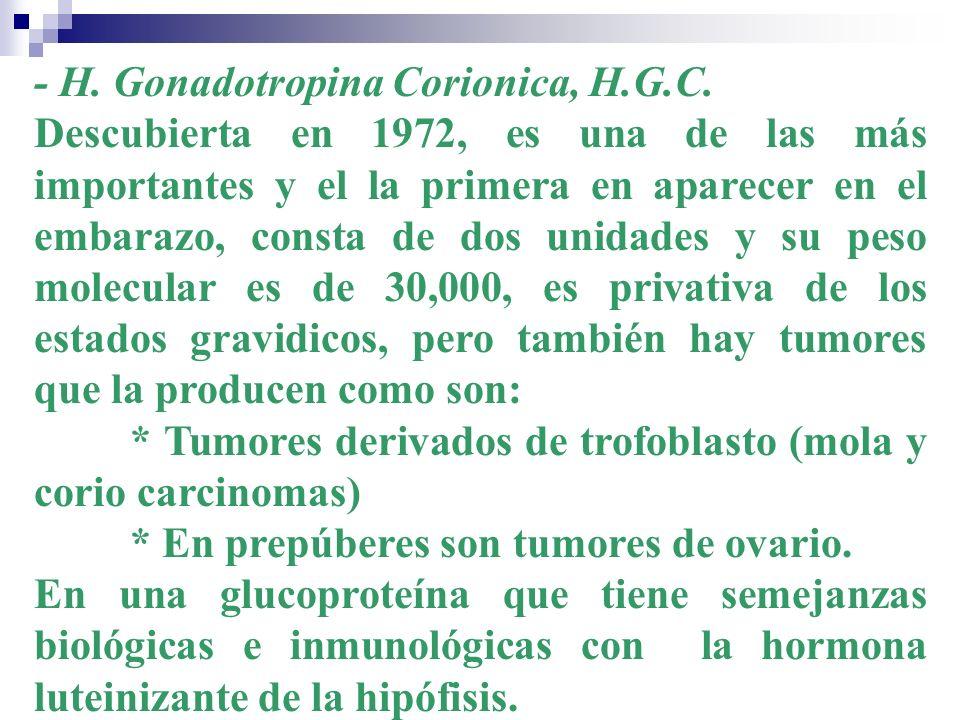 - H. Gonadotropina Corionica, H.G.C. Descubierta en 1972, es una de las más importantes y el la primera en aparecer en el embarazo, consta de dos unid