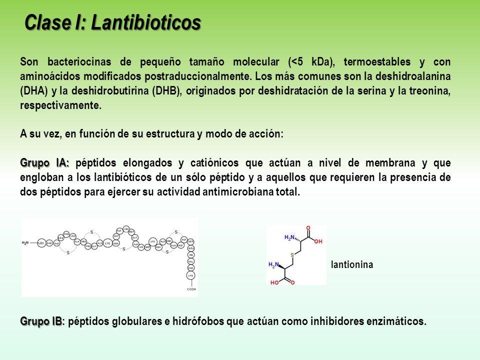 Clase I: Lantibioticos Clase I: Lantibioticos Son bacteriocinas de pequeño tamaño molecular (<5 kDa), termoestables y con aminoácidos modificados postraduccionalmente.