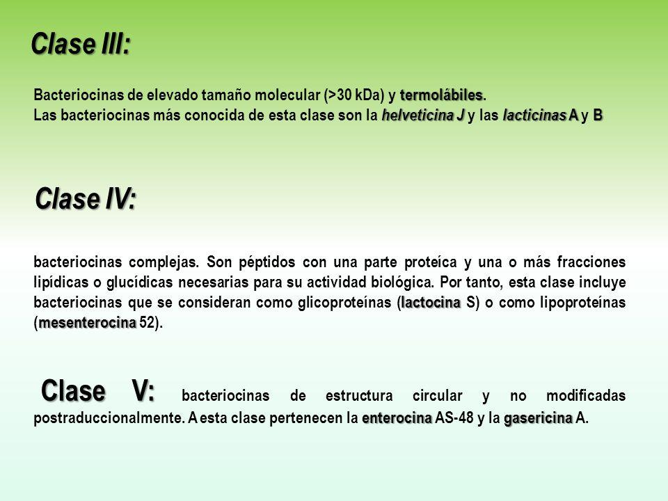 termolábiles Bacteriocinas de elevado tamaño molecular (>30 kDa) y termolábiles. helveticina Jlacticinas A B Las bacteriocinas más conocida de esta cl