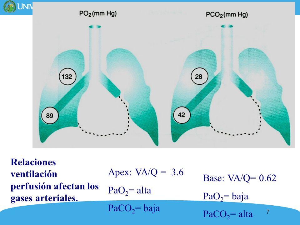 7 Relaciones ventilación perfusión afectan los gases arteriales. Apex: VA/Q = 3.6 PaO 2 = alta PaCO 2 = baja Base: VA/Q= 0.62 PaO 2 = baja PaCO 2 = al