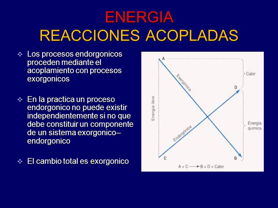 ENERGIA REACCIONES ACOPLADAS Los procesos endorgonicos proceden mediante el acoplamiento con procesos exorgonicos Los procesos endorgonicos proceden m