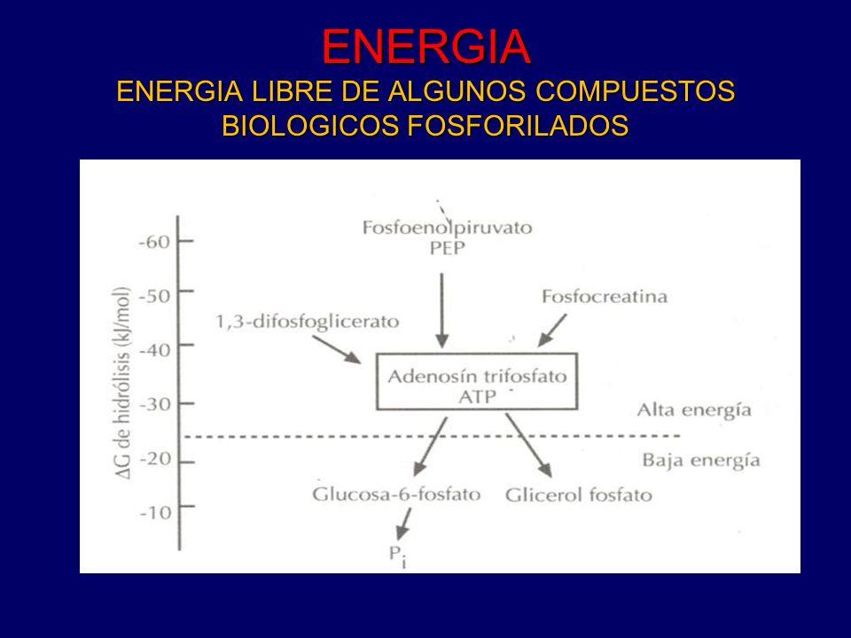 ENERGIA ENERGIA LIBRE DE ALGUNOS COMPUESTOS BIOLOGICOS FOSFORILADOS