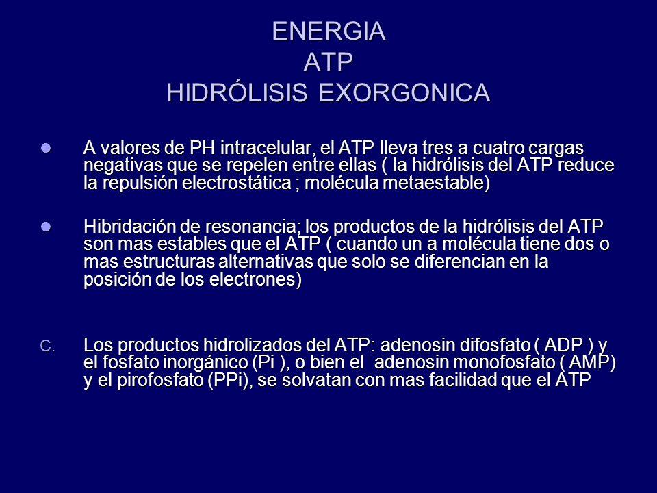 ENERGIA ATP HIDRÓLISIS EXORGONICA A valores de PH intracelular, el ATP lleva tres a cuatro cargas negativas que se repelen entre ellas ( la hidrólisis