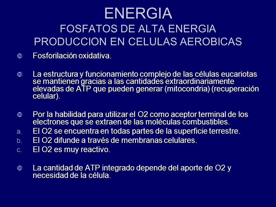 ENERGIA FOSFATOS DE ALTA ENERGIA PRODUCCION EN CELULAS AEROBICAS Fosforilación oxidativa. Fosforilación oxidativa. La estructura y funcionamiento comp