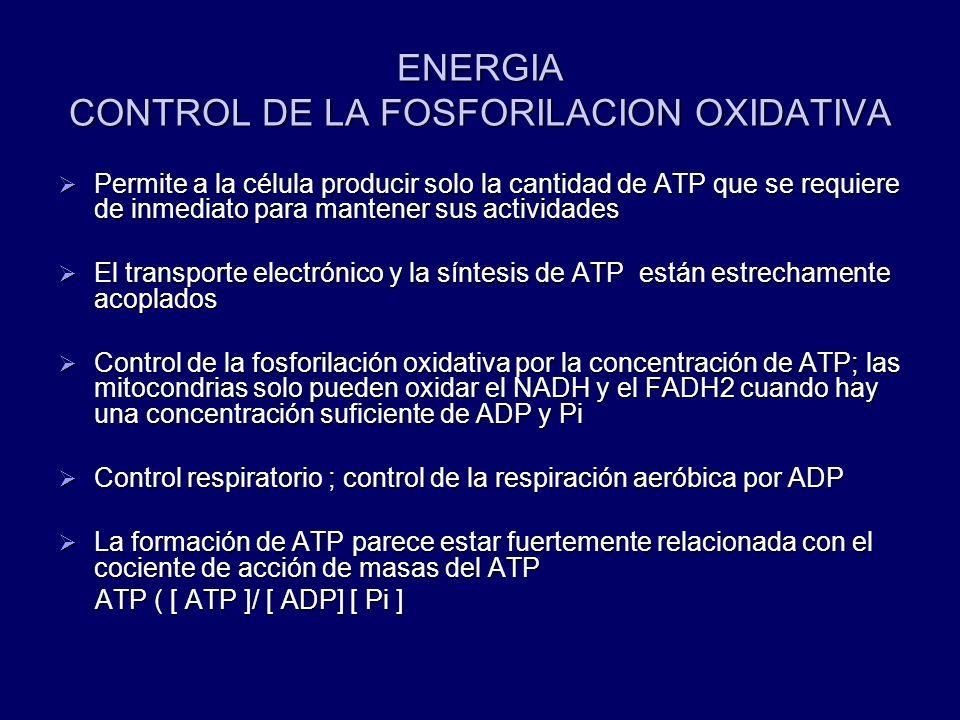 ENERGIA CONTROL DE LA FOSFORILACION OXIDATIVA Permite a la célula producir solo la cantidad de ATP que se requiere de inmediato para mantener sus acti