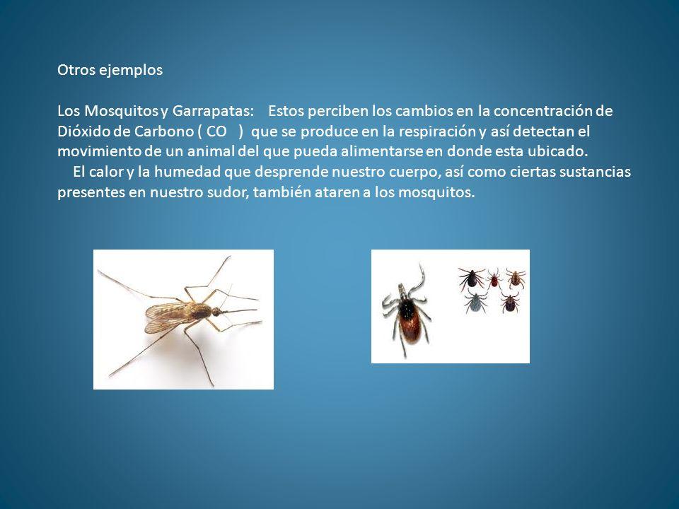 Otros ejemplos Los Mosquitos y Garrapatas: Estos perciben los cambios en la concentración de Dióxido de Carbono ( CO ) que se produce en la respiració