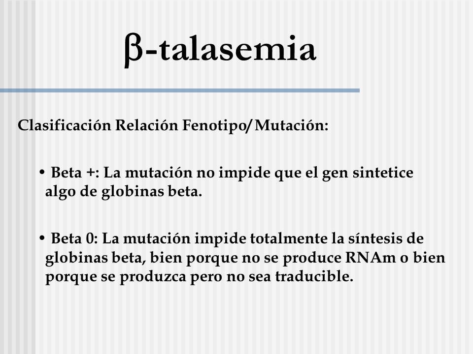 Clasificación Relación Fenotipo/ Mutación: Beta +: La mutación no impide que el gen sintetice algo de globinas beta. Beta 0: La mutación impide totalm