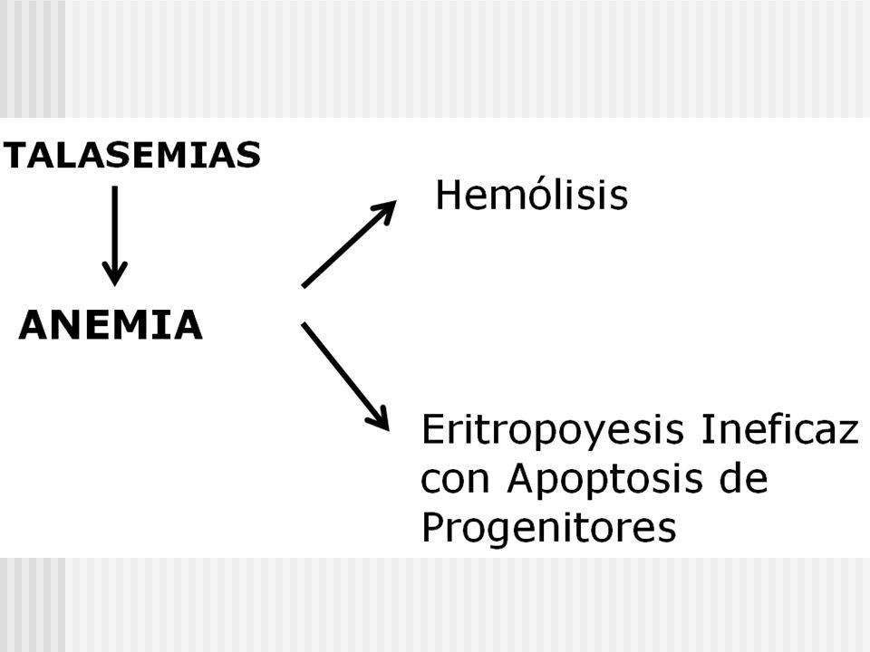 Clasificación Relación Fenotipo/ Mutación: Beta +: La mutación no impide que el gen sintetice algo de globinas beta.
