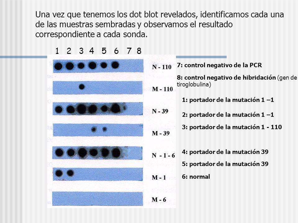 Una vez que tenemos los dot blot revelados, identificamos cada una de las muestras sembradas y observamos el resultado correspondiente a cada sonda. 1