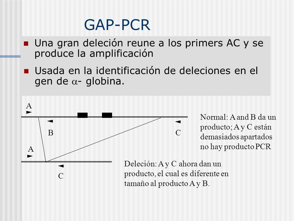 GAP-PCR Una gran deleción reune a los primers AC y se produce la amplificación Usada en la identificación de deleciones en el gen de - globina. A BC C