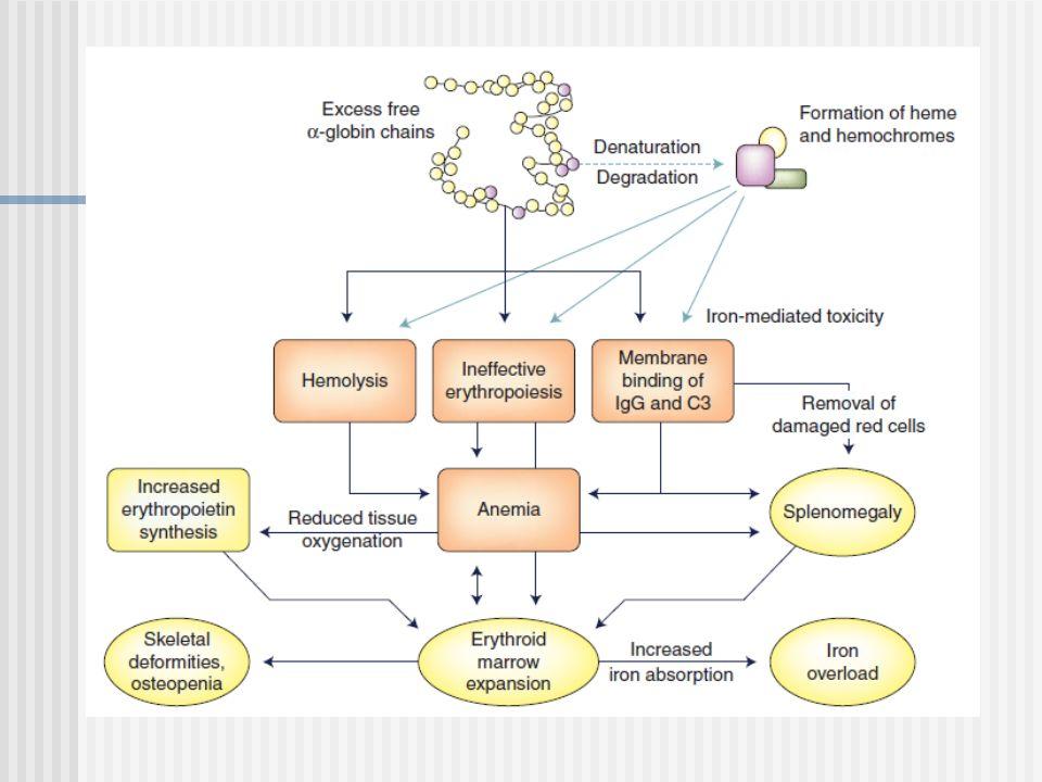 Apoptosis de precursores Normalmente: Hipoxia Eritropoyetina (EPO), EPO la expresión de Bcl-XL, un gen antiapoptótico.
