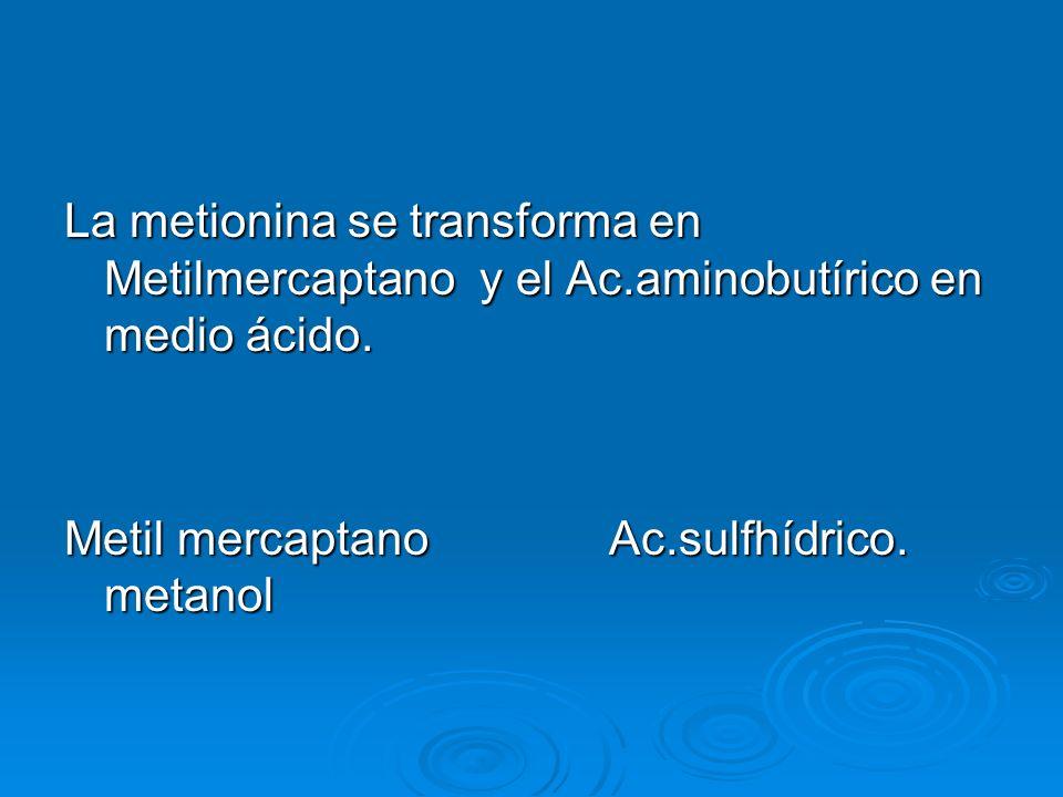 La metionina se transforma en Metilmercaptano y el Ac.aminobutírico en medio ácido. Metil mercaptano Ac.sulfhídrico. metanol