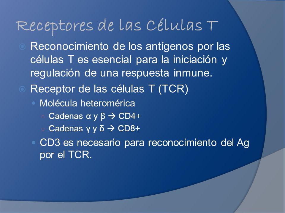 Receptores de las Células T Reconocimiento de los antígenos por las células T es esencial para la iniciación y regulación de una respuesta inmune. Rec