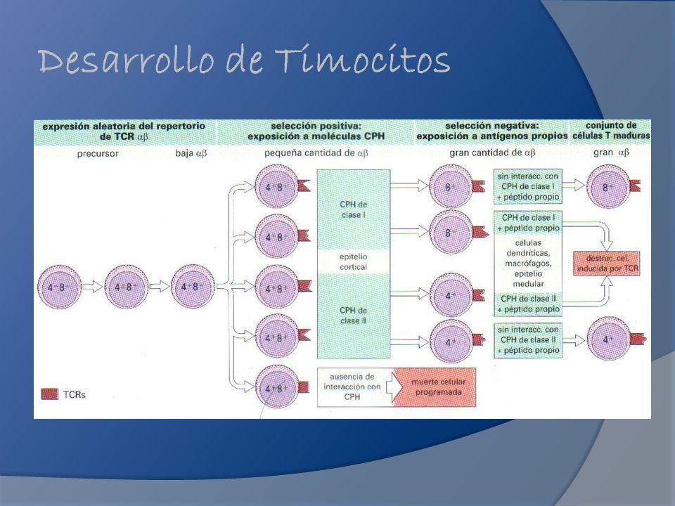 Desarrollo de Timocitos