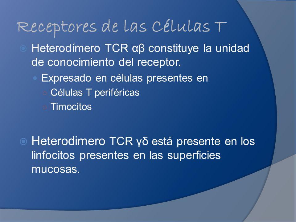 Receptores de las Células T Heterodímero TCR αβ constituye la unidad de conocimiento del receptor. Expresado en células presentes en Células T perifér