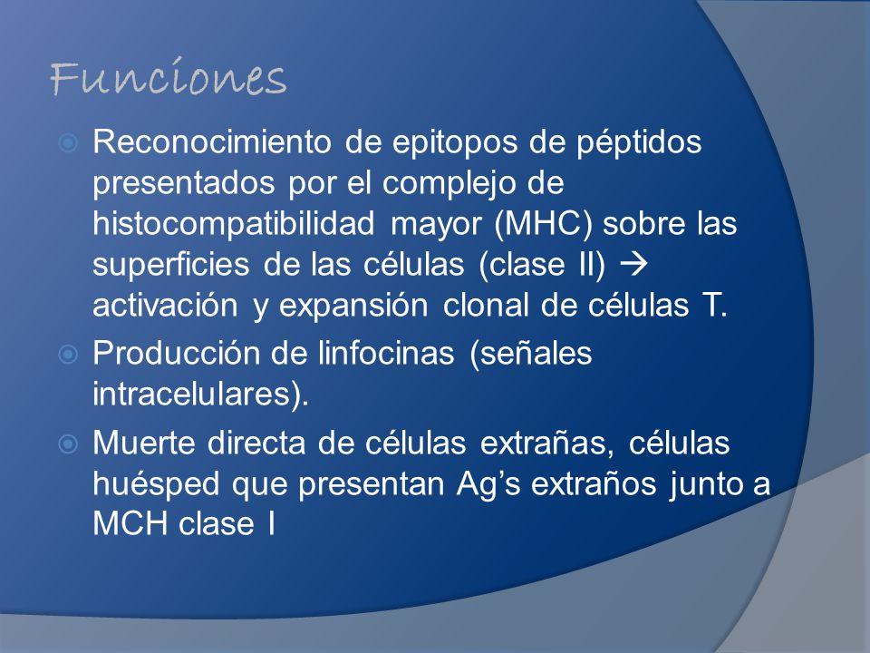 Funciones Reconocimiento de epitopos de péptidos presentados por el complejo de histocompatibilidad mayor (MHC) sobre las superficies de las células (