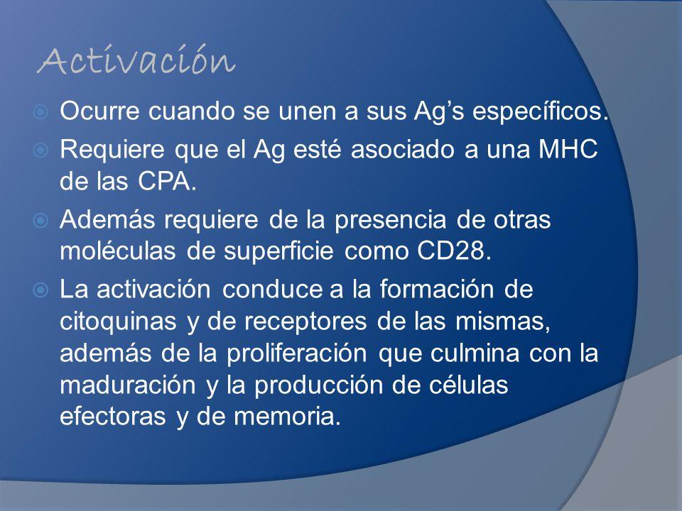 Activación Ocurre cuando se unen a sus Ags específicos. Requiere que el Ag esté asociado a una MHC de las CPA. Además requiere de la presencia de otra