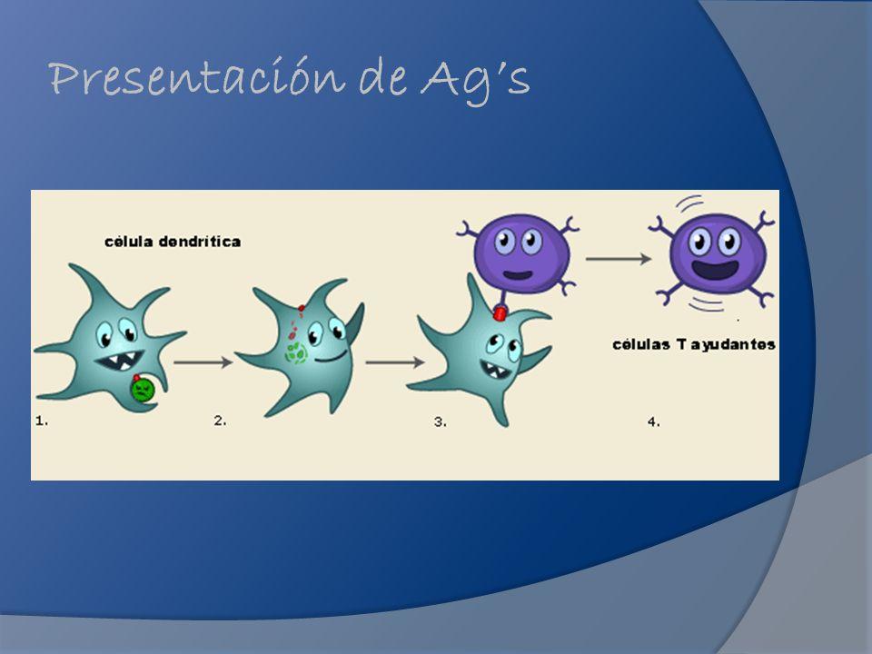 Presentación de Ags