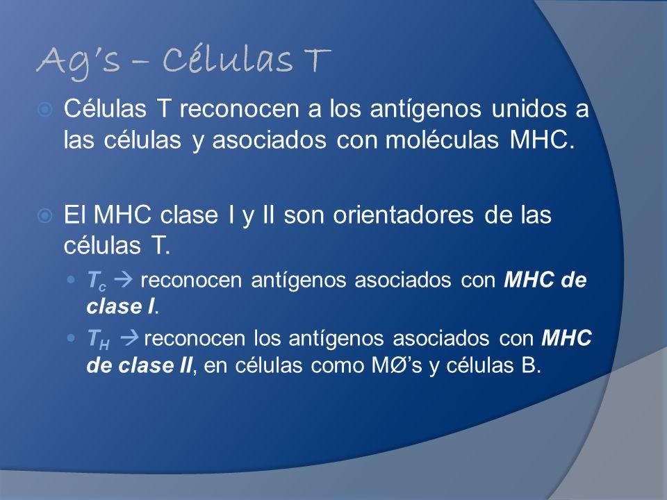 Ags – Células T Células T reconocen a los antígenos unidos a las células y asociados con moléculas MHC. El MHC clase I y II son orientadores de las cé