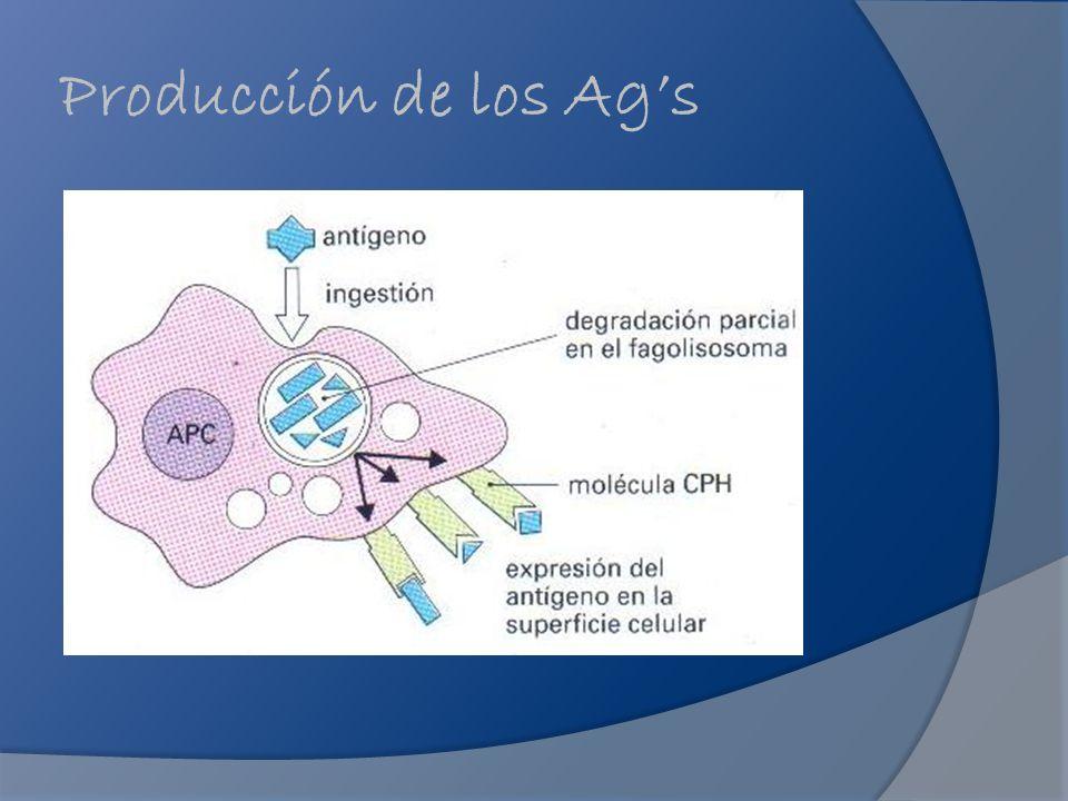 Producción de los Ags