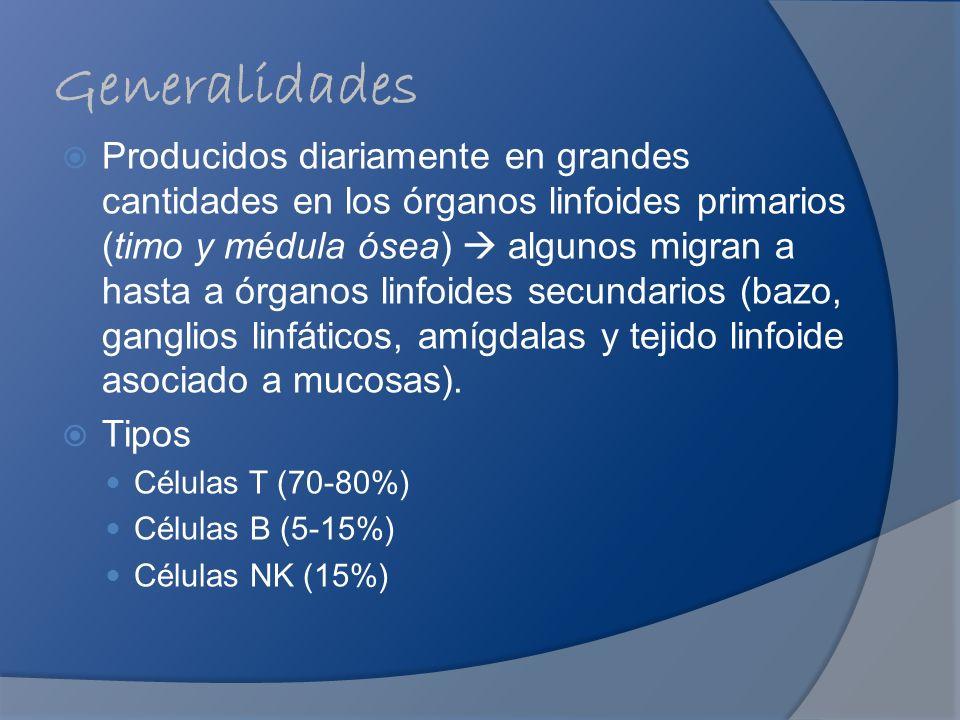 Generalidades Producidos diariamente en grandes cantidades en los órganos linfoides primarios (timo y médula ósea) algunos migran a hasta a órganos li