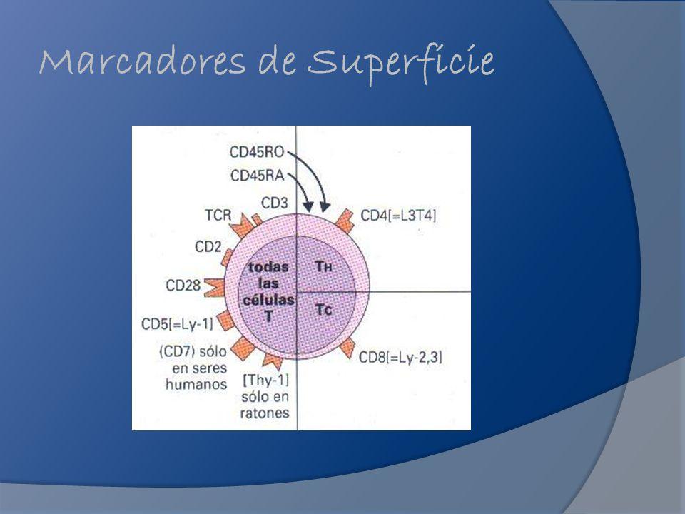 Generalidades Los marcadores se pueden agrupar en familias Superfamilia de las Inmunoglobulinas similares a las Igs (CD3, CD4, CD8 y MHC de clase I y II).