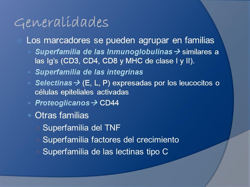 Generalidades Los marcadores se pueden agrupar en familias Superfamilia de las Inmunoglobulinas similares a las Igs (CD3, CD4, CD8 y MHC de clase I y