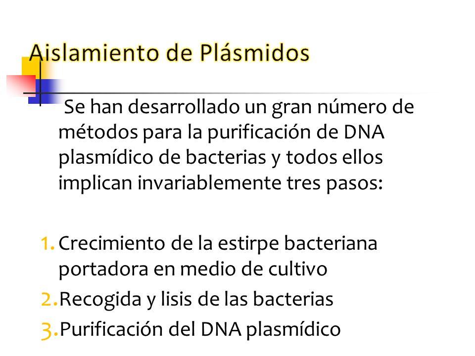 Se han desarrollado un gran número de métodos para la purificación de DNA plasmídico de bacterias y todos ellos implican invariablemente tres pasos: 1
