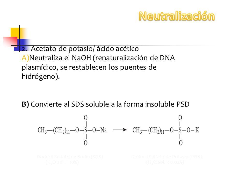 2.- Acetato de potasio/ ácido acético A)Neutraliza el NaOH (renaturalización de DNA plasmídico, se restablecen los puentes de hidrógeno). B) Convierte