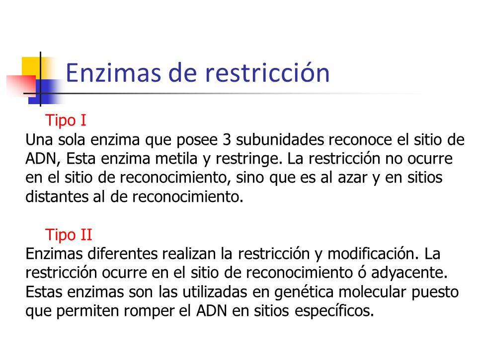 Enzimas de restricción Tipo I Una sola enzima que posee 3 subunidades reconoce el sitio de ADN, Esta enzima metila y restringe. La restricción no ocur