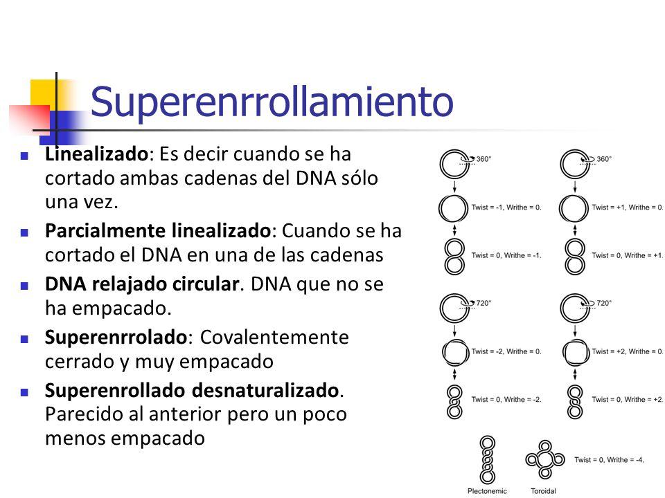 Superenrrollamiento Linealizado: Es decir cuando se ha cortado ambas cadenas del DNA sólo una vez. Parcialmente linealizado: Cuando se ha cortado el D