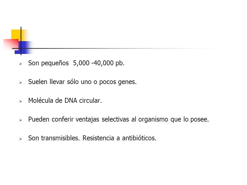 Son pequeños 5,000 -40,000 pb. Suelen llevar sólo uno o pocos genes. Molécula de DNA circular. Pueden conferir ventajas selectivas al organismo que lo
