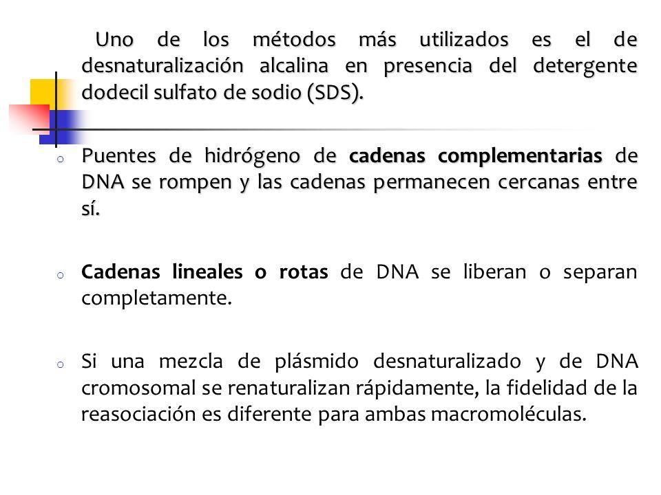 Uno de los métodos más utilizados es el de desnaturalización alcalina en presencia del detergente dodecil sulfato de sodio (SDS). Uno de los métodos m