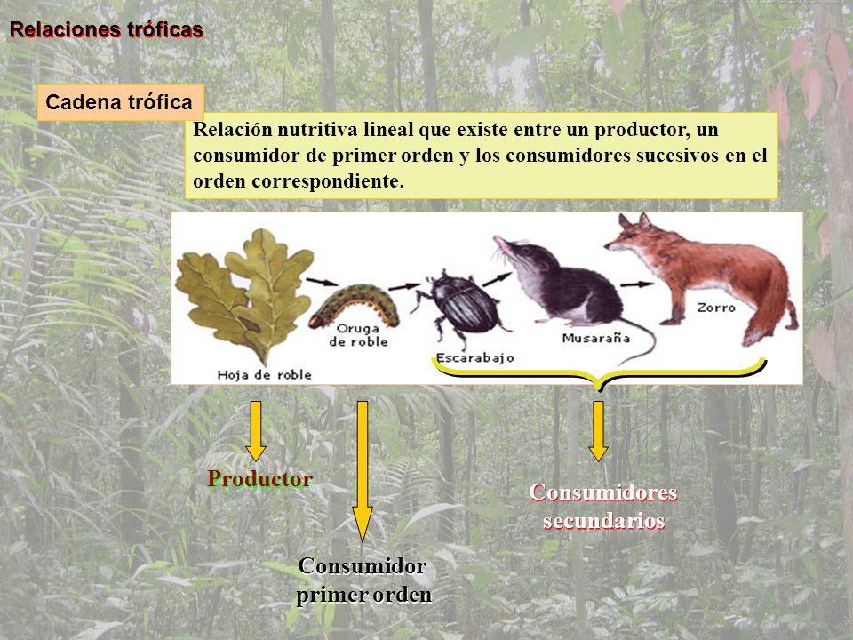 CARACTERISTICASESTRATEGAS DE LA RESTRATEGAS DE LA K Tiempo de vida Corto.