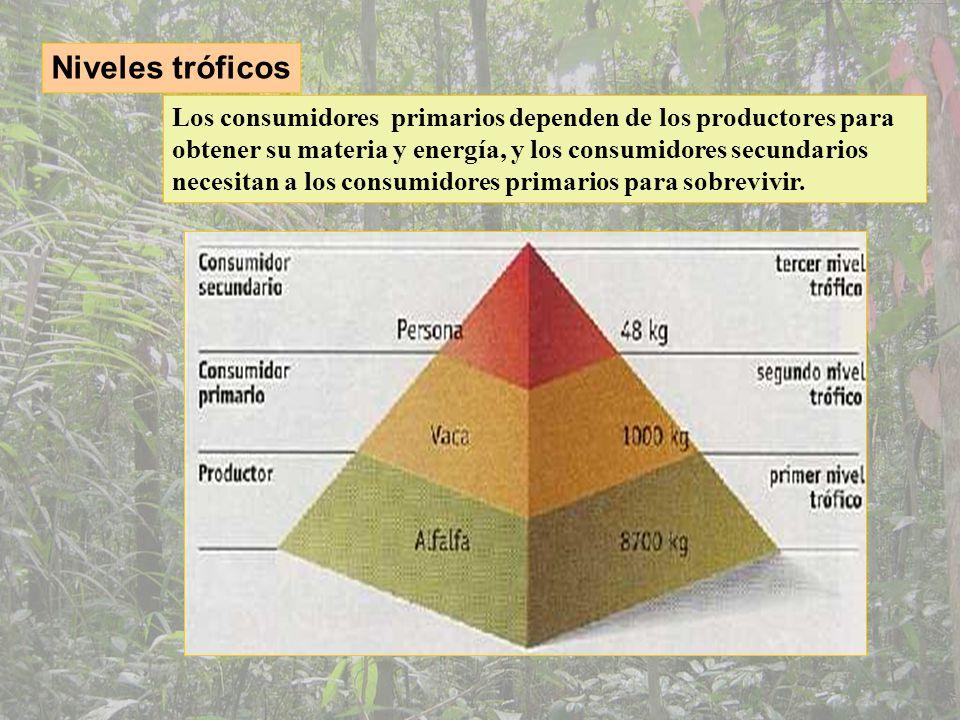 Competencia Interespecífica: entre dos especies que necesitan el mismo recurso para subsistir Intraespecífica: entre dos individuos de la misma especie que necesitan los mismos recursos para subsistir.