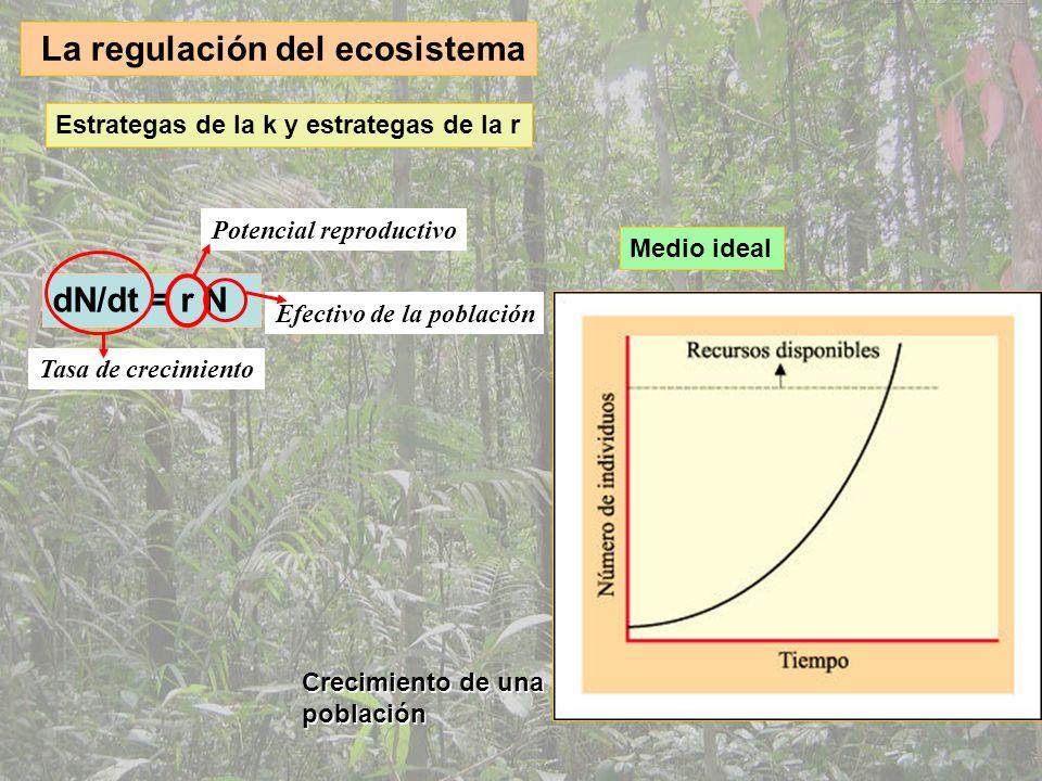 Medio real Estrategas de la k y estrategas de la r dN/dt = rN ((k-N)/k) Capacidad reproductiva Capacidad de carga del sistema N (k-N)/k =1 r determina el crecimiento N resistencia ambiental N=K población cte