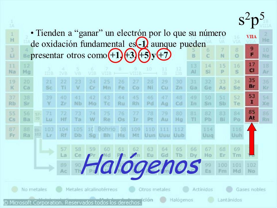 Halógenos VIIA s2p5s2p5 Tienden a ganar un electrón por lo que su número de oxidación fundamental es -1, aunque pueden presentar otros como +1, +3, +5