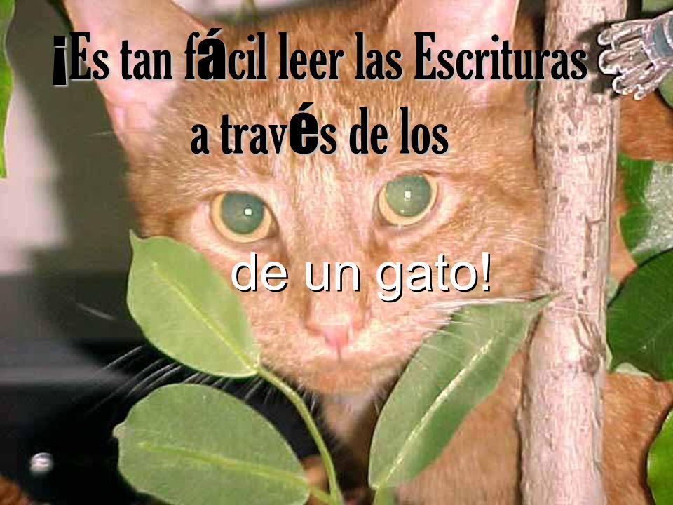 www.CatandDogTheology.org Dios desea que nos enfoquemos en Su gloria pero cuando los gatos eligen qu é escuchar y qu é leer sólo se enfocan en lo que