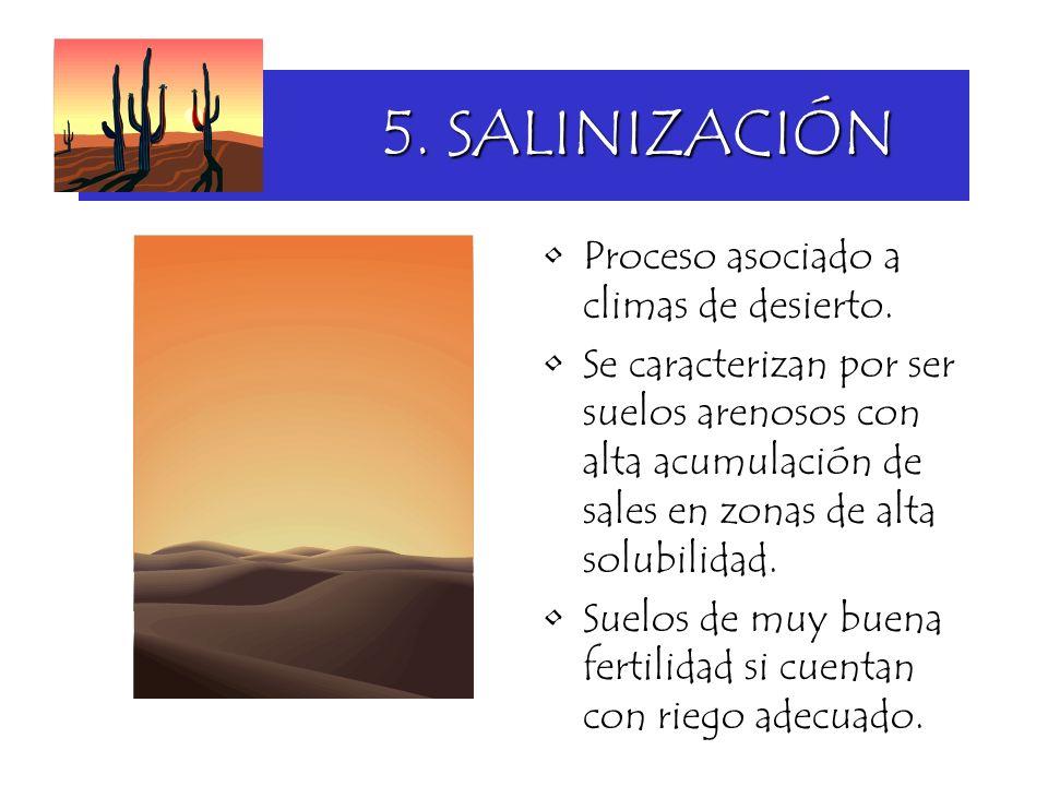5. SALINIZACIÓN Proceso asociado a climas de desierto. Se caracterizan por ser suelos arenosos con alta acumulación de sales en zonas de alta solubili