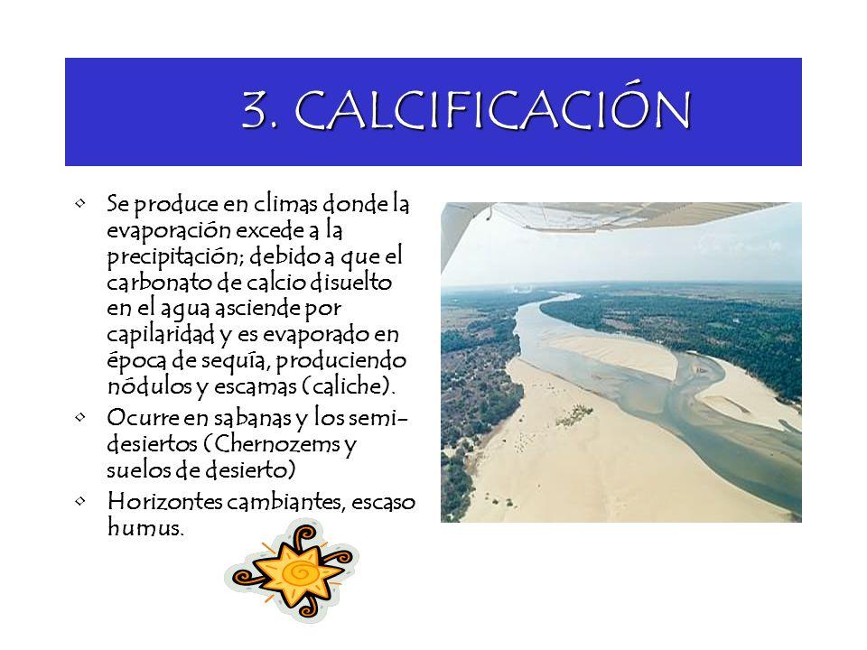 3. CALCIFICACIÓN 3. CALCIFICACIÓN Se produce en climas donde la evaporación excede a la precipitación; debido a que el carbonato de calcio disuelto en